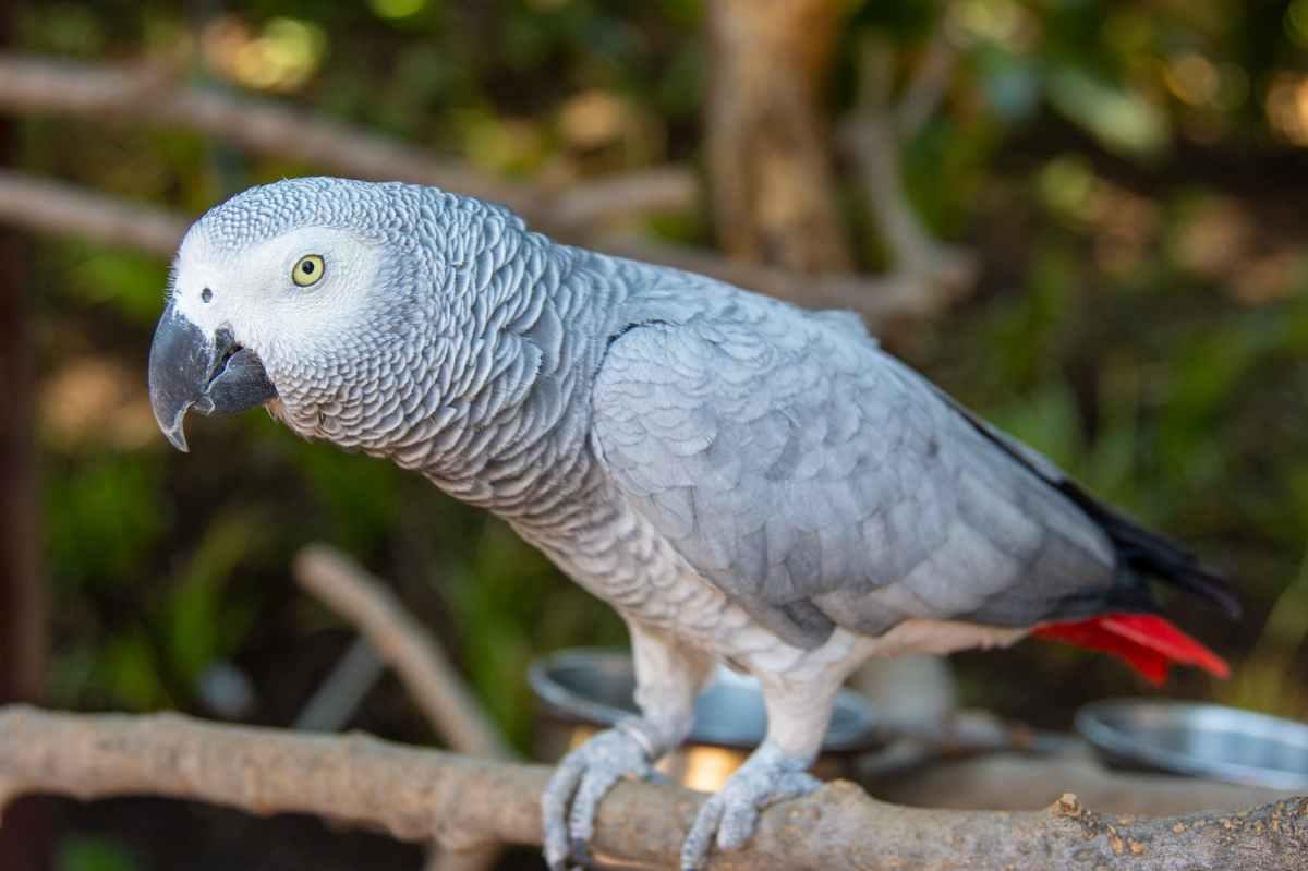 Sweary parrots and socialmedia